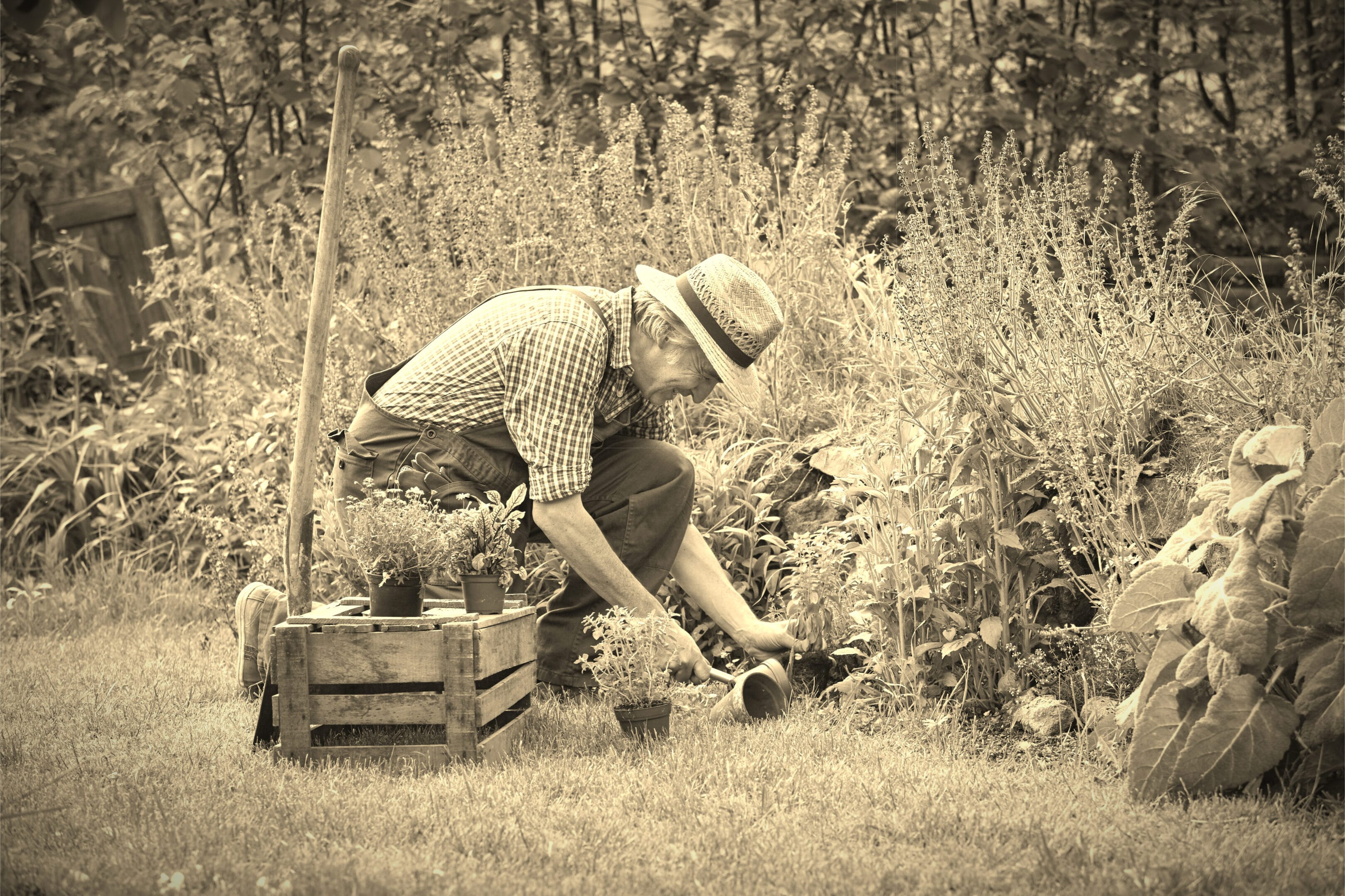 Alter Mann bei der Gartenarbeit